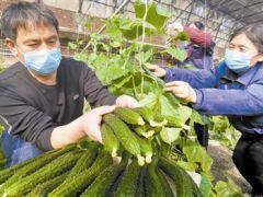 蔬菜日上市量 月底可超3000吨