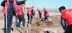天津寶坻區黨員干部群眾參加義務植樹活動