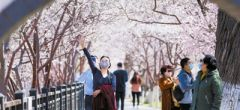 桃花堤和西沽公園開園首日 天津市民有序入園賞景