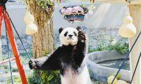 熊猫喜乐 七岁庆生