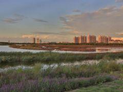 天津又一湿地公园即将完工!
