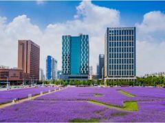 滨海新区前三季度主要经济指标回稳向好,市场活力持续释放