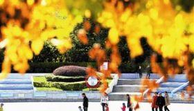 津城金秋美景 吸引市民观赏
