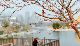 春意渐浓 滨城处处花儿开
