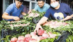 应季水果 质优价平